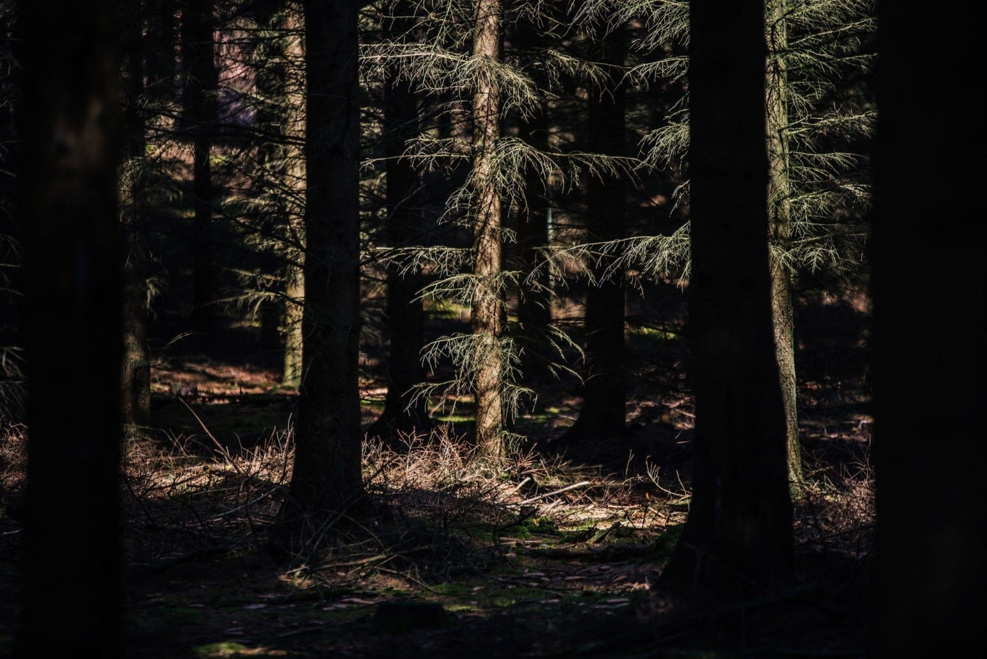 Im Zauberwald der Granitz